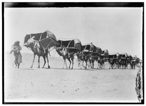 Camel caravan of pilgrims to Mecca, 1910